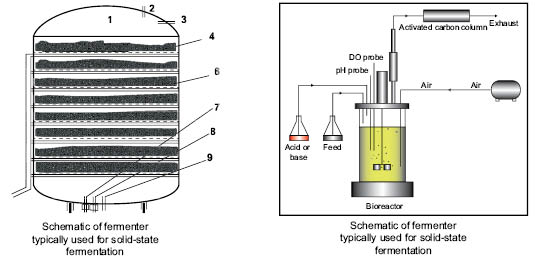 application of solid state fermentation