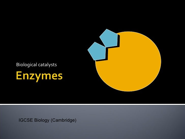 practical applications of enzyme catalysts