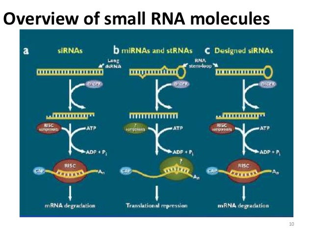 rna interference applications in plants