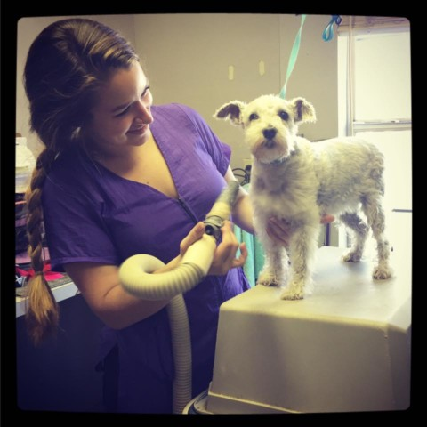 therapy dog international application form