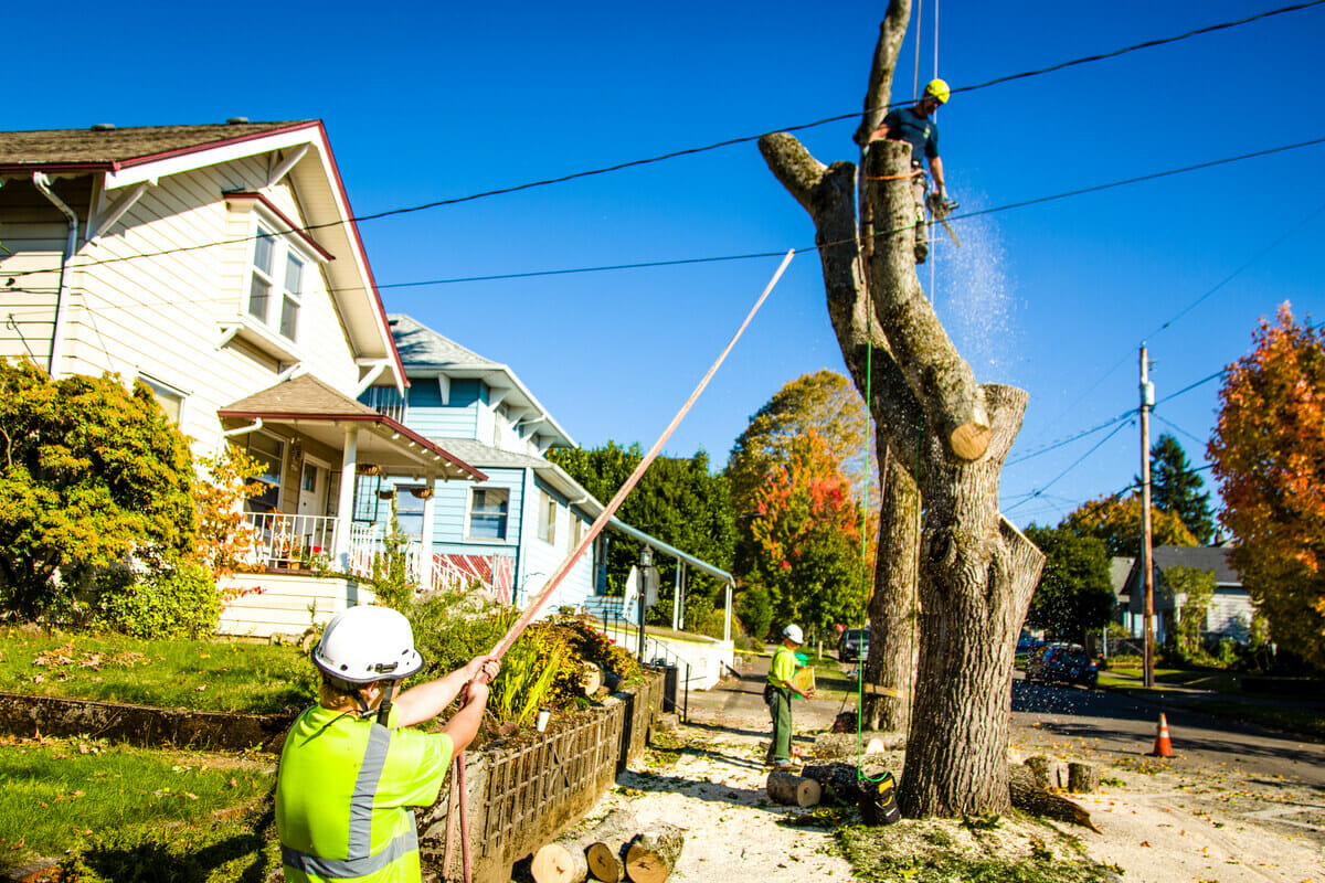 city of portland tree removal permit application