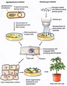 applications of recombinant dna technology in medicine pdf