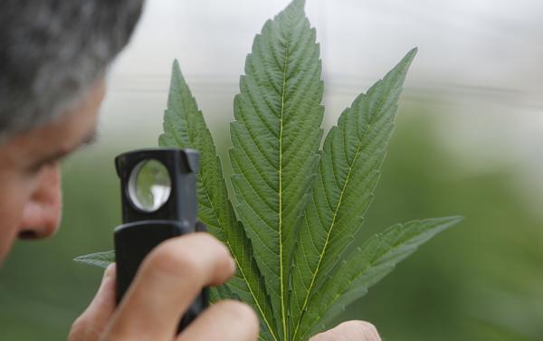 medical marijuana application form arizona