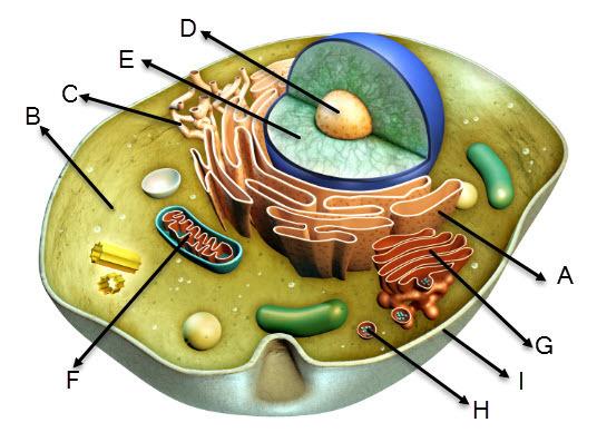 application d un syma x8hw sur un cell