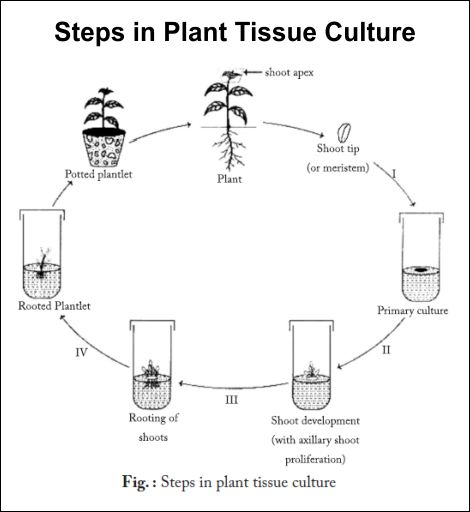 application of tissue culture in industry