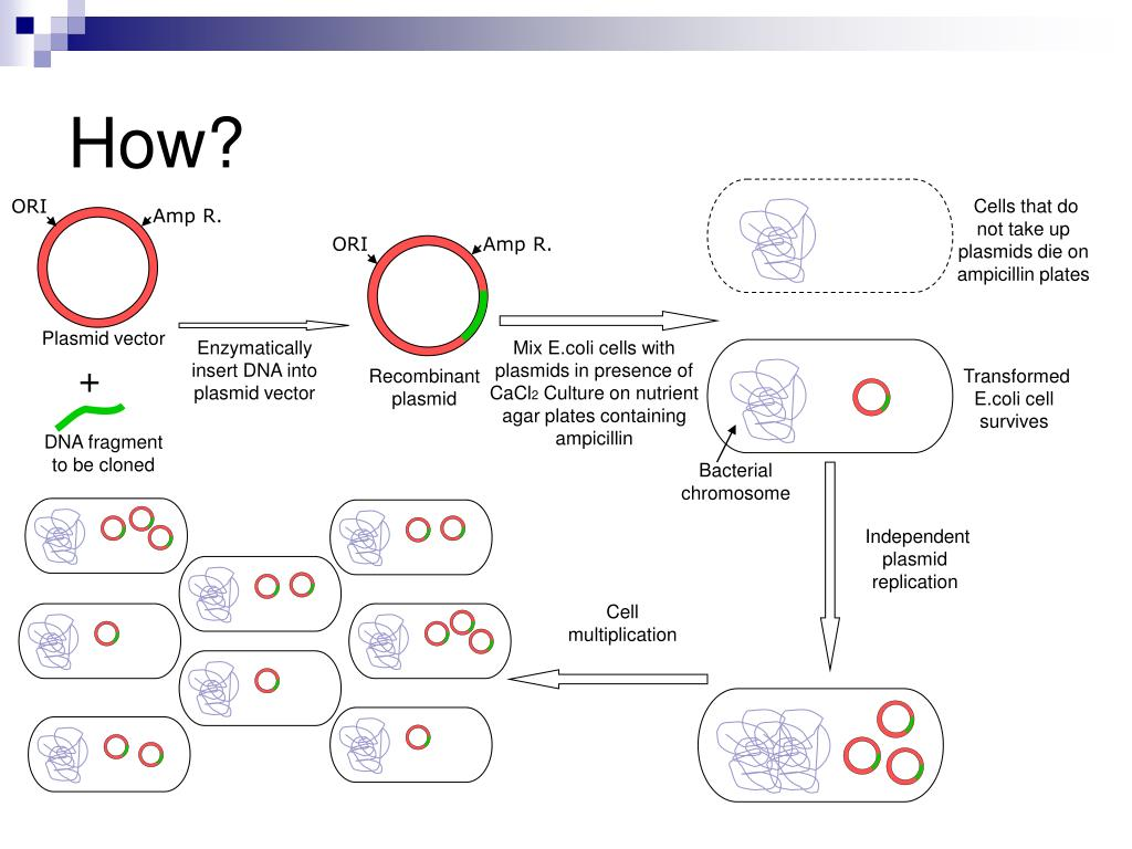 application of gene cloning ppt