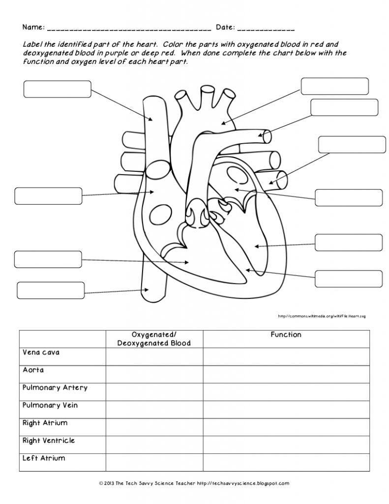 human body application test question