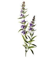 dosage huile essentielle melaleuca pure application peau