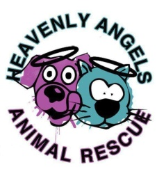 heavenly angels animal rescue adoption application