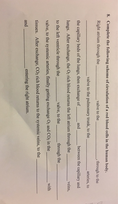 how to answer question 8 of human rights application