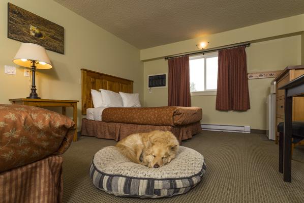 petsmart pet hotel job application