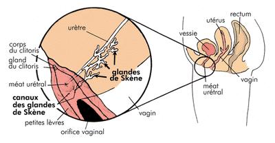 position pour mettre un applicateur vaginal