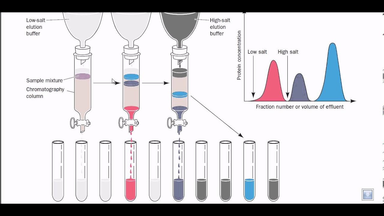 principle and application of ion exchange chromatography ppt