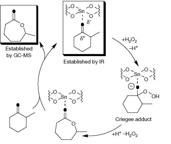 zeolites main application catalytic cracking